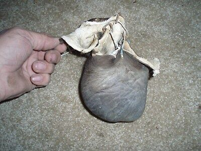 bison scrotum real buffalo Ball bag oddity nutsack gag gift mountain man bag A