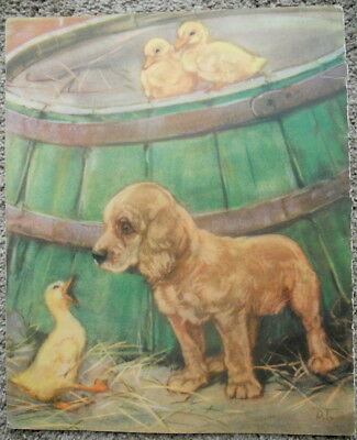 Golden Retriever Puppy With Ducks Vintage Color Print Diana Thorne Cute!