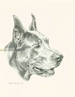 #63 BLUE/GREY  GREAT DANE *  dog art print * Pen and ink drawing * Jan Jellins