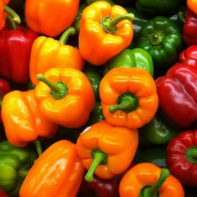 200PCS Heirloom Seeds Color Bell Pepper Sweet Chilli Mixed Colors Vegetable Hot