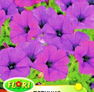 PETUNIA 500 HIGH QUALITY FLOWER SEEDS F2 COLORAMA MIXED