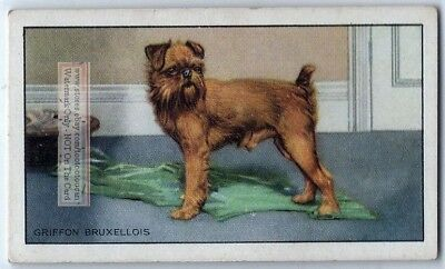 Brussels Griffon Dog 75+ Y/O Ad Trade Card