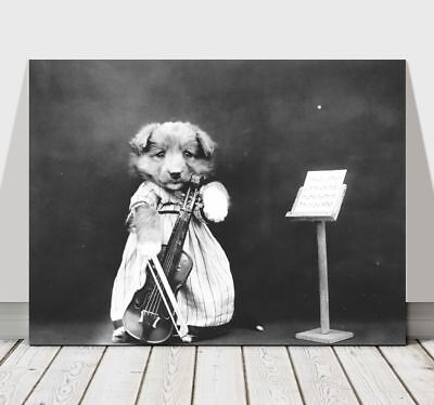 CUTE VINTAGE B&W Dog Dressed Up With Violin - CANVAS ART PRINT POSTER - 12x8""