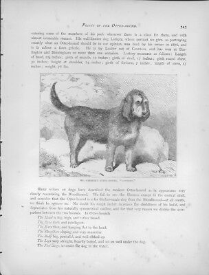 """Otterhound Steel Engraving from """"The Book of the Dog"""" Antique Print"""