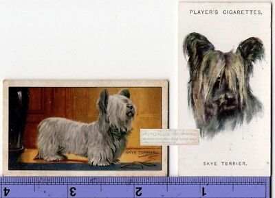 Skye Terrier Dogs 2 Different Vintage Ad Trade Cards 2nd