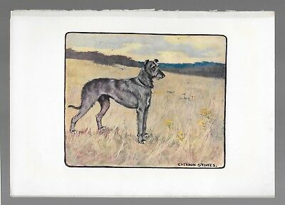 Deerhound Vintage Color Dog Print G. Vernon Stokes