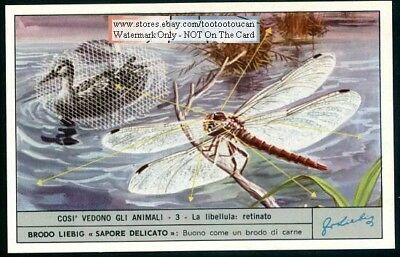 How The Eyes Of A Dragonfly Work c40 Y/O Trade Ad Card
