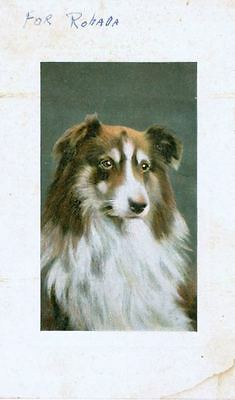 Old Postcard PC Collie or Sheltie Dog c1908 England National Series Embossed