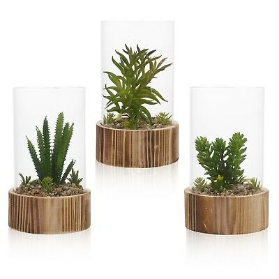Decorative Artificial Cactus Plant In Glass Display Bell Jar Wood Base Terrarium