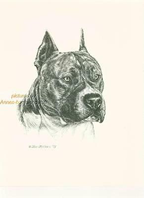 #186 AM STAFF TERRIER dog art print * Pen and ink drawing by Jan Jellins