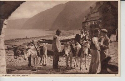 D353. Donkeys At Harbour Of Clovelly with Sea View