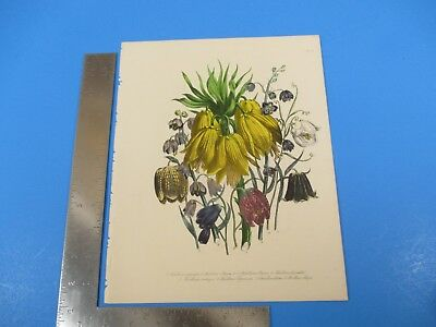Antique Hand Colored Assorted Flowers Drawing Lithograph Plate L536