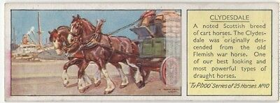 Clydesdale Horse Breed Equestrian Riding Farm  c80 Y/O Trade Ad Card