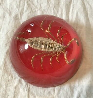 Creepy Vintage Real Scorpion Insect in Clear & Red Lucite Dome Paperweight Maack
