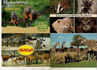48 postcards of ANIMALS & ZOOS