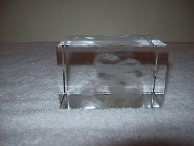 Rattlesnake inside glass cube Paperweight