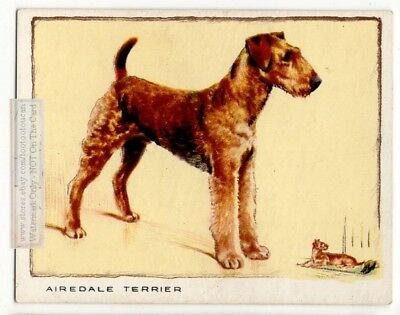 Airedale Terrier  Dog  80+ Y/O Trade Ad Card