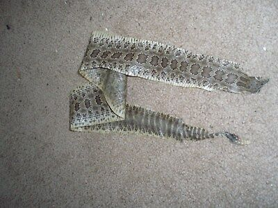 rattlesnake skin prairie rattler hide soft tanned VERY COOL Gothic pen blanks 22