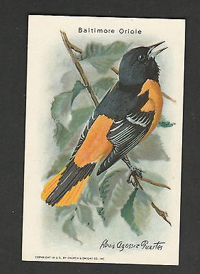 Church & Dwight Advertising Cards~Useful Birds of America~ 2nd Different Reverse