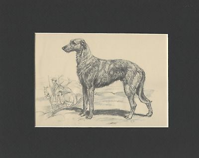 * Scottish Deerhound - Vintage Dog Print - 1942 Megargee