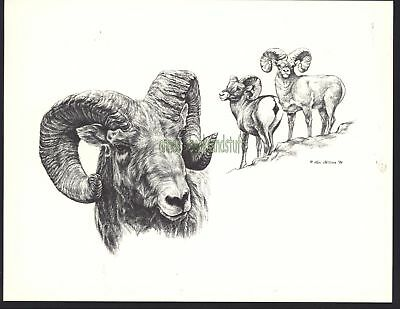 #150 BIGHORN SHEEP wildlife art print * Pen and ink drawing done by Jan Jellins