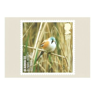 Bearded Tit – Bird On Species At Risk List - Royal Mail Series Phq 302 Postcard