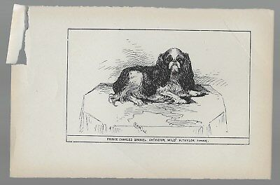 "Prince Charles Spaniel ""Victor Wild"" Antique Engraved Dog Print"