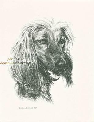 #254 AFGHAN HOUND portrait dog art print * Pen and ink drawing by Jan Jellins