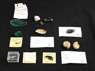 Collection Of 12 x Various FOSSILS & Stones Collectable - B03