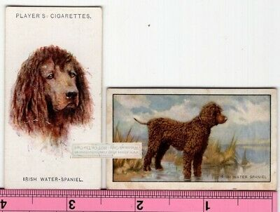 Irish Water Spaniel Dogs 2 Different Vintage Ad Trade Cards 2nd