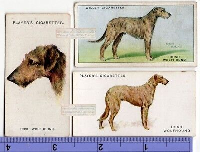 Irish Wolfhound Dogs 3 Different Vintage Ad Trade Cards 2nd
