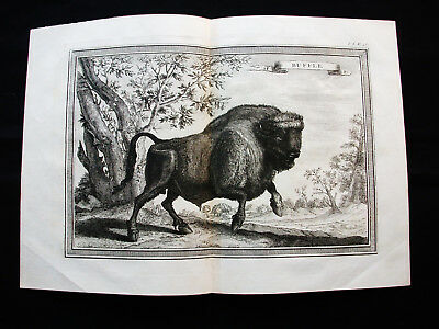 "1754 BELLIN - ""Amazing COPPER ENGRAVING"" of AFRICAN BUFFALO, AFRICA, AFRIQUE"