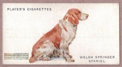 Welsh Springer Spaniel Dog Canine Pet Vintage Ad Trade Card