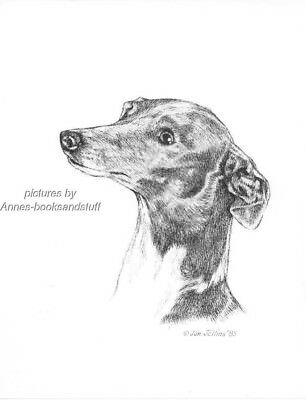 #349 ITALIAN GREYHOUND *  dog art print * Pen and ink drawing * Jan Jellins
