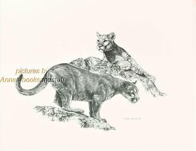 #176 two (2) COUGARS wild life art print done by Jan Jellins * pen & ink