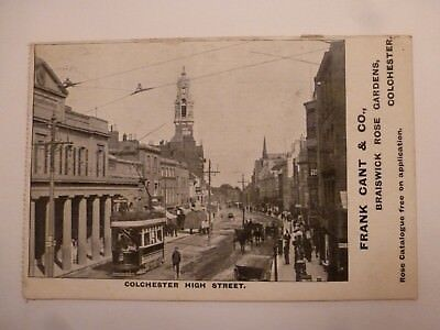 Vintage Advertising Postcard Colchester High Street Frank Cant Rose Gardens (P)