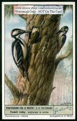 Great Spotted Woodpecker c50 Y/O Trade AdCard