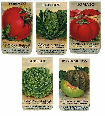 Set of 5 Different Antique Vegetable Seed Packets, Tomato Lettuce 1910-20's, H04