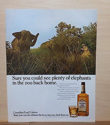 1971 magazine ad for Lord Calvert Whiskey - camera safari in Africa, elephant