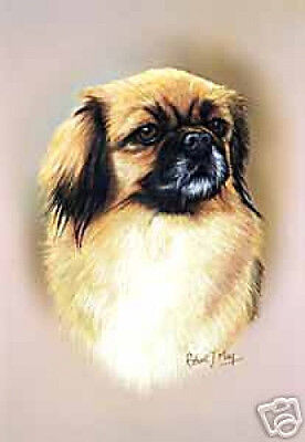Robert J. May Head Study - Tibetan Spaniel (RMDH142)