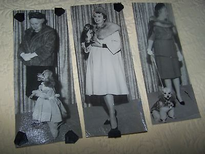 Three 1950's photos Models , Furs , And Poodles