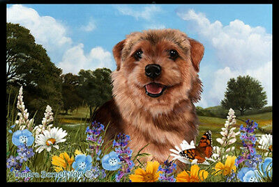 Indoor/Outdoor Summer Floor Mat - Norfolk Terrier  (TB) 39225