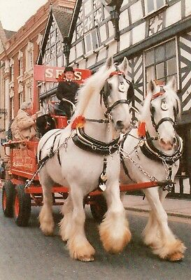 postcard of SFAS SHIRE HORSES WORKING IN LICHFIELD
