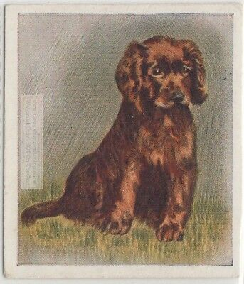 Sussex Spaniel Puppy Dog Pet Animal Canine 80+ Y/O Trade Ad Card
