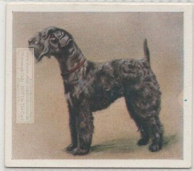 Kerry Blue Terrier Puppy Dog Pet Animal Canine 80+ Y/O Trade Ad Card