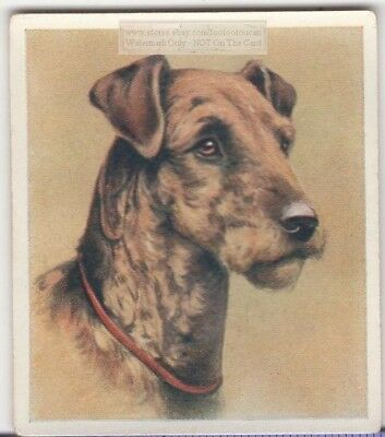 Airedale Terrier Dog Pet Animal Canine c80 Y/O Trade Ad Card