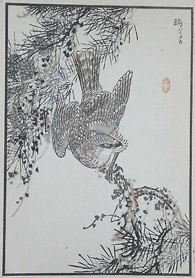 THE SPARROWHAWK : Print Of a 1880s JAPANESE WOODBLOCK Bird Print By BAIREI
