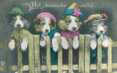 Vintage 4 Border Collie Dog Puppies Postcard PC 1930 Netherlands Comical 4some