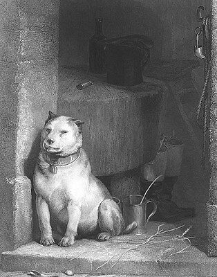 TOUGH BEATEN OLD ENGLISH BULLDOG GUARD ~ 1849 Edwin LANDSEER Art Print Engraving