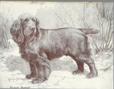 Sussex Spaniel Vintage Dog Print Nina Scott Langley c.1935